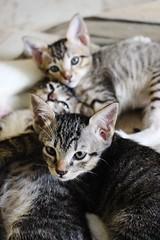 IMG_2474 (Shanmukha 6) Tags: cats kittens shanmukhakangatharan shankangatharan