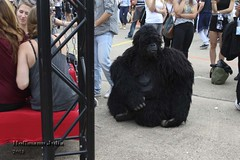 The Gorillas by Creature Feature (Jlia Jlia Hoffmann) Tags: streetperformance gorillas foolsparadise creaturefeature