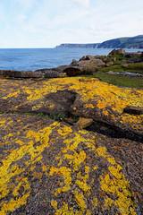 20150906-33-Yellow lichen (Roger T Wong) Tags: rocks australia tasmania lichen foreshore 2015 tasmanpeninsula maignonbay sony1635 rogertwong sel1635z sonya7ii sonyilce7m2 sonyalpha7ii sonyfe1635mmf4zaosscarlzeissvariotessart