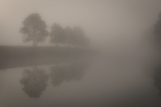 Foggy Morning .