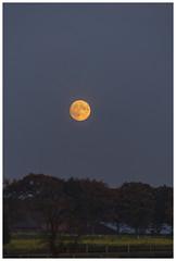 Mondaufgang im Emkum (fredericfromage) Tags: abend mond mnsterland mondaufgang emkum