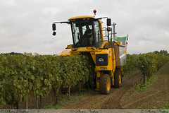 Demo GREGOIRE (Photos Nathou) Tags: machine vigne viticulture vendange saison 2015 optimum photographeamateur canonfrance photoamateur pellenc