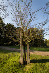 Automne au parc de Woluwe (Bruxelles) (Philippe Clabots (#PhilippeCPhoto)) Tags: autumn brussels nature automne belgium belgique belgie lumire bruxelles arbres brussel parc saison parcdewoluwe philippecphoto