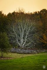 2015-11-01_Q8B4042 © Sylvain Collet.jpg (sylvain.collet) Tags: autumn france nature automne sur marne vairessurmarne vaires