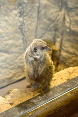 LOUISVILLE, KENTUCKY ZOO (gobucks2) Tags: zoo 2015 louisvillezoo november2015 louisvillekentuckyzoo fall2015