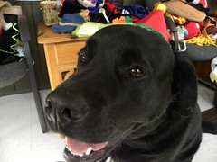 Charlie (happy_hounds) Tags: dogdaycare dog daycare puppy pups boarding cagefree dogsofflickr purebred rescuedog happyhounds plymouthmichigan happyhoundsdogdaycare