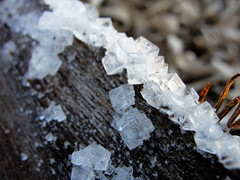 cristalli di sale (AndreLup) Tags: crystals sale salt sel sal cristales cristalli