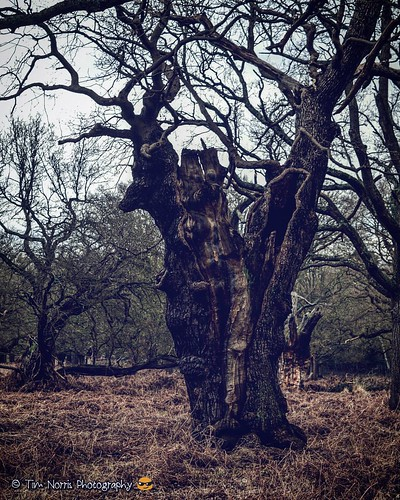 More treesiness in Richmond Park