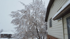 Sudden storm (denebola2025) Tags: christmas winter white snow storm cold warning utah view north ogden pleasant