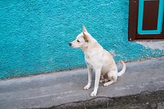 Colombian Vertigo 2015- www.wmaisy.com -27 aout 2015 -270.jpg (Wilfried Maisy Photojournaliste) Tags: photography photojournalism co antioquia colombie photojournalisme salamina photographiehumaniste photographiedocumentaire