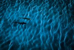 Shapes and Patterns (Frank Busch) Tags: blue island shark holidays waves shapes maldives angaga frankbusch wwwfrankbuschname photobyfrankbusch frankbuschphotography imagebyfrankbusch holidays2015 wwwfrankbuschphoto