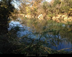 Austin Autumn Barton Creek: green and blue (Jen's Photography) Tags: city november autumn urban plants brown black reflection tree green fall nature water leaves austin outside outdoors words day texas branches cellphone cell sunny foliage capitol austintexas springs bartonsprings atx iphone texascapitol 2015 centraltexas capitoloftexas zilkermetropolitanpark jensphotography austinphotography austintexascapitol austintexasphotography iphone5c zilkermetropolitanpark2100bartonspringsrdaustintx78704austintexasgov annandroybutlerhikeandbiketrails