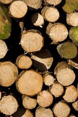ckuchem-7147 (christine_kuchem) Tags: wald abholzung baum baumstmme bume einschlag fichten holzeinschlag holzwirtschaft waldwirtschaft