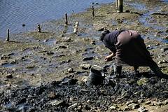 Apanha da ameija!! (puri_) Tags: mar mar vazia mulher apanha escavar areia balde picmonkey
