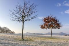 Bikote. (Iurgi.) Tags: autumn otoo alava euskadi tree frio cold