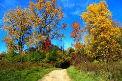 A World of Color (Totally Realistic Visionz) Tags: nature outdoors outside fall autumn foliage colors scenery bluesky
