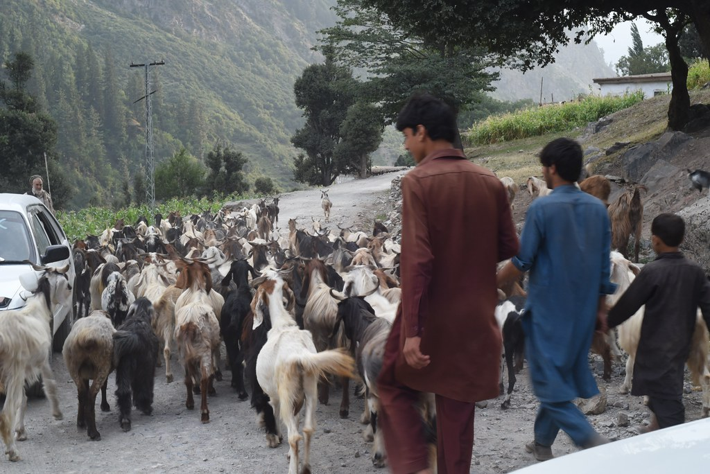 Ushu Road around Ushu Valley (Batool Nasir) Tags: khyber pakhtunkhwa pakistan ushuvalley ushu