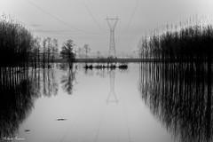 Il Po Esondazione (roby rx) Tags: po fiume acqua esondazione alberi