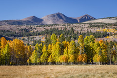 Eastern Sierra Fall Colors 2016 (Jeffrey Sullivan) Tags: mono county easternsierra sierranevada leevining california united states usa landscape nature photography canon eos 6d photo copyright 2016 jeff sullivan october fall colors