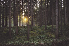 Wald (digital_underground) Tags: wald forest green sun sunset trees tree germany schleswigholstein gras