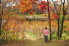 Beauty (Elizabeth Sallee Bauer) Tags: 67yearold horizontal nature autumn beautyinnature boy child colorful fall forest hiking leaves nonurbanscene oneboyonly outdoors outside trail trees