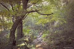 Un paseo por el monte (mibagui22) Tags: sendero empedrado ladera montaña mibagui22 otoño