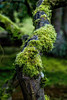 Covered in Moss (WA_David) Tags: type moss indoororoutdoor seattlejapanesegardens mammals springtme domesticanimals fungi outdoor 2016 animals year japanesegadens photography plants viewpoint style macro digital color japanesegardens dog earlyspring vertical portfolio orientation lichen gardensandparks