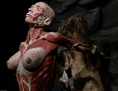Finally Free (subterraneancarsickblues) Tags: amsterdam holland netherlands exhibition exposition bodyworlds body human anatomy woman plastination gunthervonhagens canon 6d eos6d 1635mm f4l lseries
