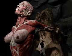 Finally Free (subterraneancarsickblues) Tags: amsterdam holland netherlands exhibition exposition bodyworlds body human anatomy woman plastination gunthervonhagens canon 6d eos6d 1635mm f4l lseries