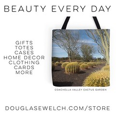 """Buy this """"Coachella Cactus Garden"""" Tote and much more from http://ift.tt/1hfrEWq #cactus #succulent #clothing #bags #technology #iphone #home #decor #housewares #arts #crafts #garden #nature #outdoors (dewelch) Tags: ifttt instagram buy this coachellacactusgarden tote much more from douglasewelchcomstore cactus succulent clothing bags technology iphone home decor housewares arts crafts garden nature outdoors"""