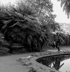 Correr en  el Parque... (lameato feliz) Tags: cornelldellobregat catalua nio boy correr frase