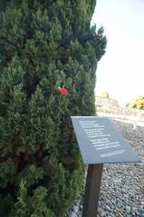 DSC02086 (jtstewart) Tags: old graveyard spain civilwar ebro tarragona massgrave 2015