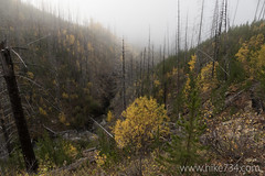 """Fog and Fall • <a style=""""font-size:0.8em;"""" href=""""http://www.flickr.com/photos/63501323@N07/22058141032/"""" target=""""_blank"""">View on Flickr</a>"""