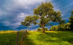 pear-tree (02) (Vlado Ferenčić) Tags: croatia podravina peartree hrvatska tokina12244 nikond90