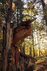 Herbstwaldspaziergang (04) (Rdiger Stehn) Tags: deutschland europa herbst natur holz wald schleswigholstein 2000s norddeutschland mitteleuropa 2015 polfilter polarisationsfilter altenholzstift altenholz 2000er canoneos550d