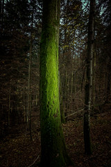 glowing tree (Schub@) Tags: autumn light sun tree green art licht sony herbst sigma e grn alpha sonne wald baum f28 moos nex 19mm welzheim a6000 wieslauf emount wieslaufschlucht ilce6000