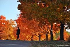 Autumn Glow (Trish Mayo) Tags: autumn stormking autumnleaves fallfoliage stormkingartcenter thebestofday gününeniyisi