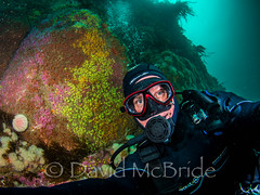 Selfie @ Wingletang Ledge, St. Agnes IOS (davidmcbridephotography) Tags: selfy selfie western rocks underwater dive diver scuba isles scilly cornwall adventure divescilly scillydiving beauchat apex nikon zen dome inon strobe jewel anemone cuckoo wrasse diving reef united kingdom scillies epic awesome spectacular colorful vivid super wide angle nauticam housing scubapro sea urchin nikkor water travel blue shy landscape sky