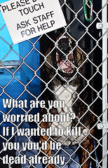 What are you worried about (KLMP) Tags: dog cat meme godfather