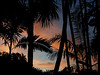 Sunset Palm Silhouette (Christine Brooks ***) Tags: sunset palms miami absolutegoldenmasterpiece