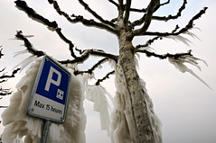 Parking sign and tree covered with ice in Versoix - Switzerland (PascalBo) Tags: winter cold tree ice sign outdoors schweiz switzerland nikon europe suisse geneva outdoor hiver parking genève arbre froid panneau glace versoix d300 pascalboegli february2012 février2012