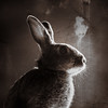 Monochrome Bunny (Jeric Santiago) Tags: pet rabbit bunny monochrome animal silhouette conejo lapin kaninchen うさぎ 兎 rabbitportrait winterrabbit