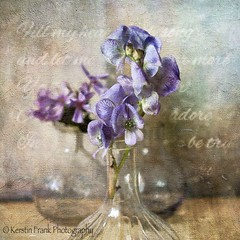 Monkshood, Wolfs bane, Helmet Flower (Kerstin Frank art) Tags: flowers stilllife texture garden vases monkshood wolfsbane kerstinfrankart lenabemanna helmetflower