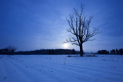 Sol Invictus (Shadows in Reflection) Tags: winter bb ff beetree theenchantress solsticesol subtlehalosundog