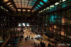 Museum d'Histoire Naturelle - Grande Galerie de l'Evolution - Paris (vlegallic) Tags: paris france animals museum nikon ledefrance evolution galerie animaux fr museumdhistoirenaturelle d610 grandegaleriedelevolution nikond610