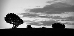 A Dreary Evening (murtphillips) Tags: countryside clohamon wexford trees sky cloud evening twilight