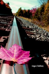 2016-10-15_07-49-48 (tpaddison1) Tags: autumn fall trees railway tracks mapleleaf colours fearless canada