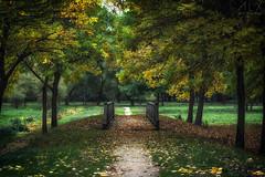 _DSC4144 (ALX-PHOTOGRAPHIE) Tags: automne autumn evening soir soire angers france arbres feuilles leaves