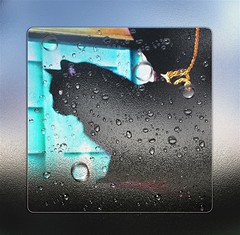 A Dreamers Wish (ingridfrd) Tags: cat pet animal dreamer gentle loving