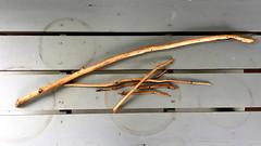 Beaver hexagram of Transformation (Rebecca Reinhart) Tags: sticks beavers presumpscotriver iphone6photography transformation hexagram mainerivers